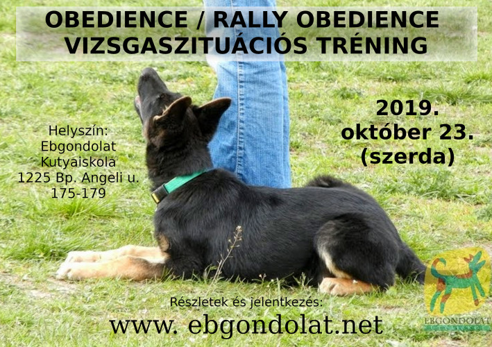 Obedience vizsgaszituációs tréning